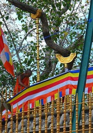 Sri Maha Bodhi Temple In Anuradhapura