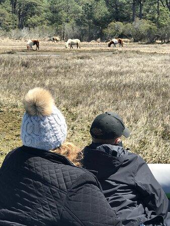 Chincoteague, VA: Northern herd.
