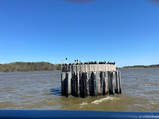 Lots of birds on pylons at Jamestown Side