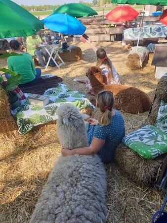Lemelerveld, Hà Lan: 's zomers lekker relaxen op het terras. En is het slecht weer? Dan verhuizen we naar de stal. Een super gezellig huiskamertje van de alpaca's. Zo kom je echt bij hun op visite!