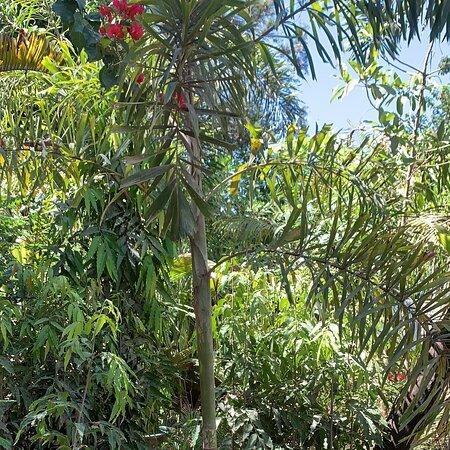 Kikambala, Kenija: Plants