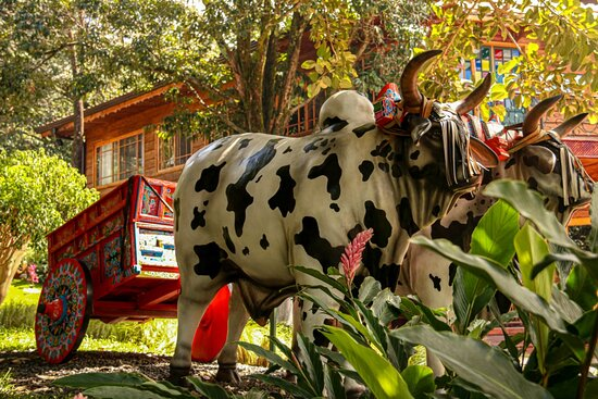 Typical Oxcart