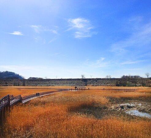 Daemyung Oil Reservoir