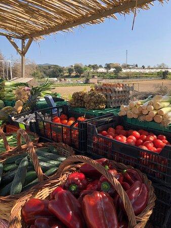 Tienda con productos de nuestro huerto