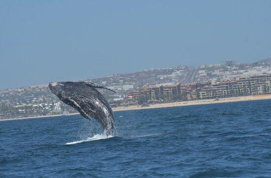 Excursão Aventura de Observação de Baleias do Zodíaco do Cabo Foto