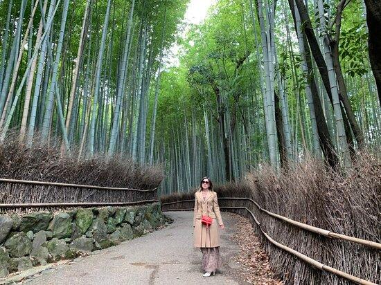 Kyoto, Japan: Arashiyama Bamboo Forest