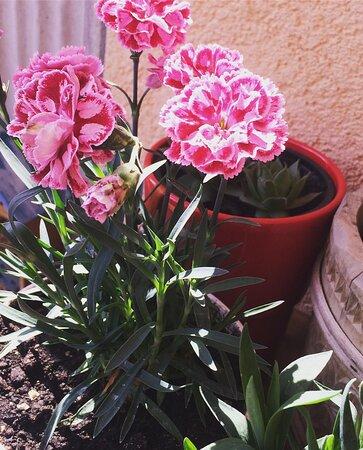 Stiglo nam proljeće! Welcome Spring!