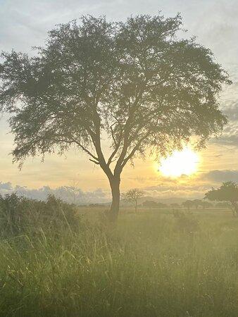 Serengeti National Park-billede