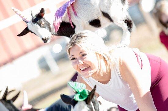 AZ Goat and Alpaca Yoga