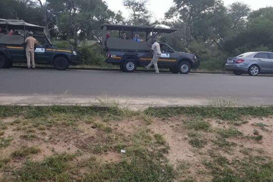 Kecm safaris