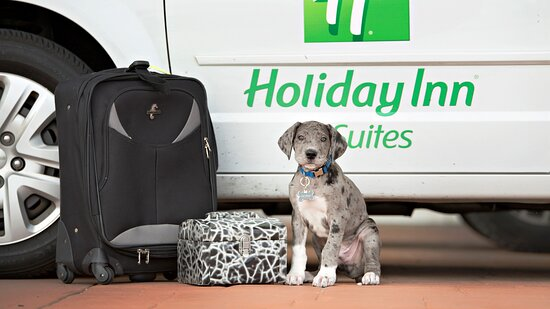 Pet friendly in our first floor guest rooms, $20 fee per night