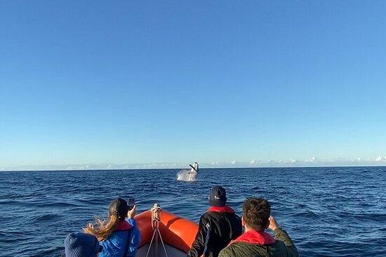 Osservazione delle balene Gold Coast