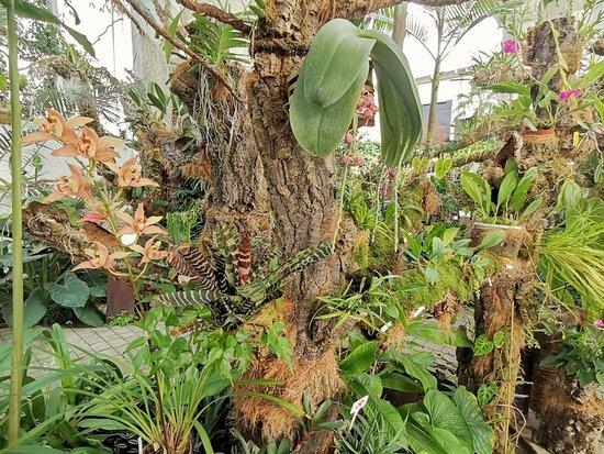 Gorgeous plant life