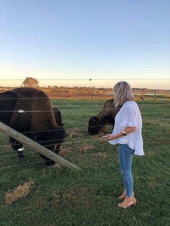 Brilliant adventure with Hank the 800 Kilogram bull!!