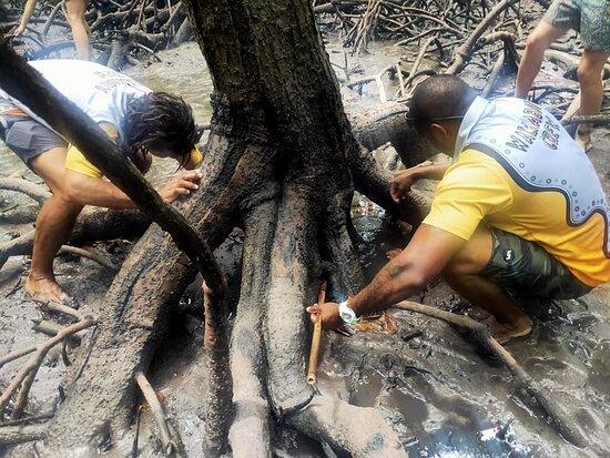 Ngana Julaymba Dungay - Full Day: Hunting for mud crabs