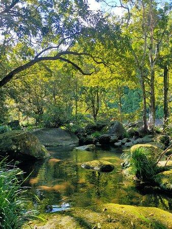 Ngana Julaymba Dungay - Full Day: Mossman Gorge
