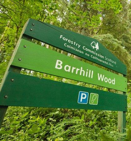 Barrhill Woods