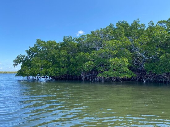 Mangroves in the Gulf