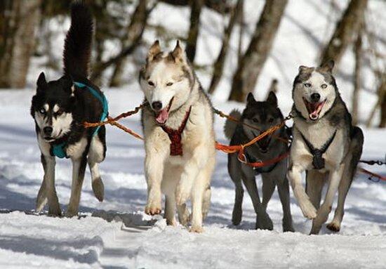 Most Pet-Friendly States in America   SafeWise  Made INN Vermont B&B - An Urban-Chic City Retreat Downtown Burlington Vermont ® - madeinnvermont.com - 802 399 2788