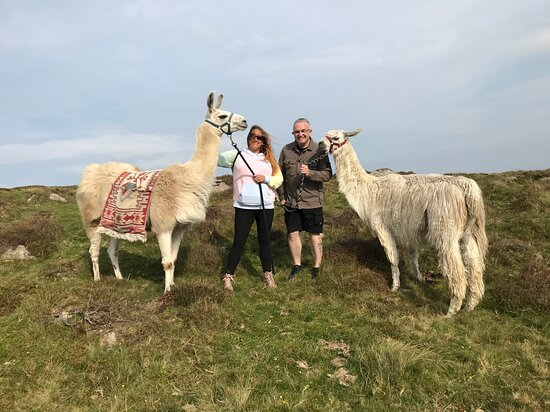 Dartmoor Llama Walks, Poundsgate, Widecombe in the Moor, Dartmoor