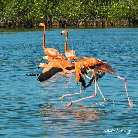 Aves acuáticas en la Ciénaga de Zapata