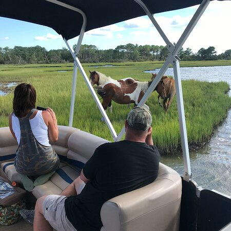 Up The Bay Pony Tours