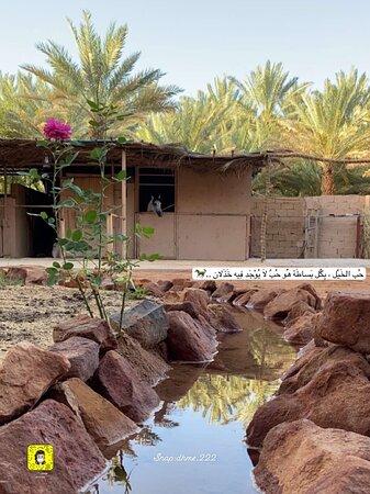 العلا, المملكة العربية السعودية: أسطبل دادان للفروسيه تأجير بالساعه عسف ايواء تعليم اساسيات الركوب