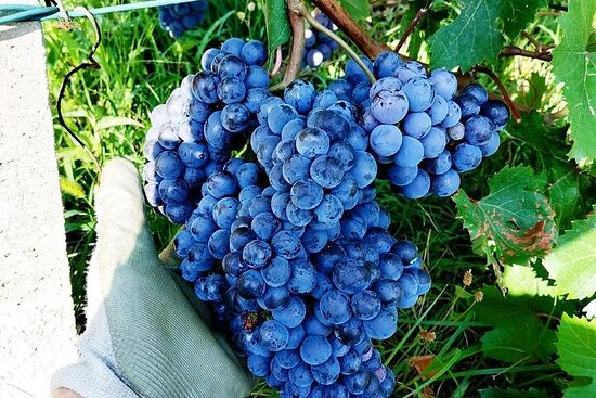 Experience of Creating Your Own Wine in the Ossola Valley
