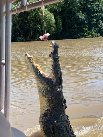Great activity. Crocs did their jumping.