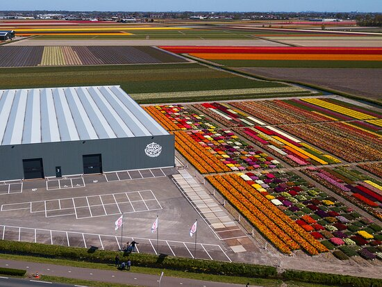 Tulip Experience Amsterdam