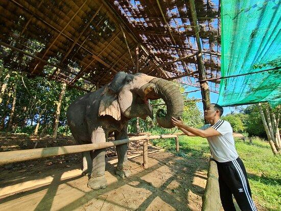 Maesin Elephant Camp