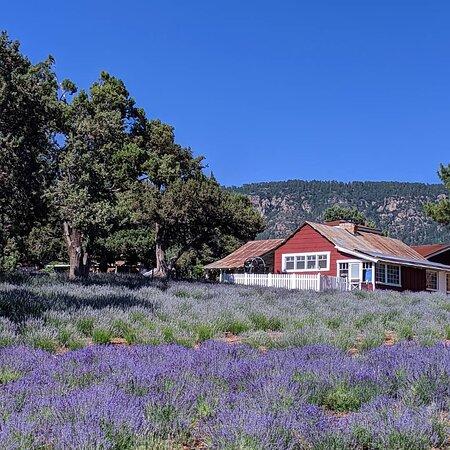 Pine Creek Lavender Farm Store