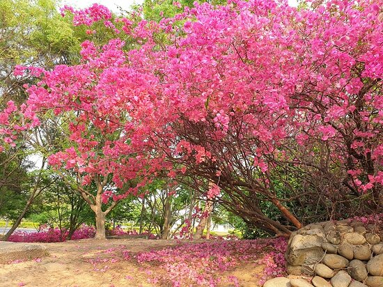 Dongda Park