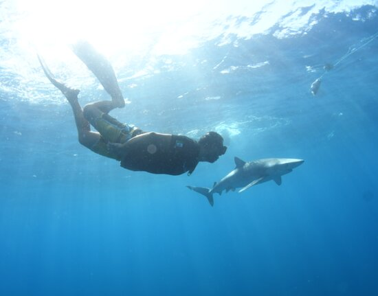 Snorkeling or Swimming with Sharks in Cabo San Lucas: Swimming right next to the Blue Shark