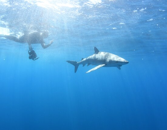 Snorkeling or Swimming with Sharks in Cabo San Lucas: Up close action photos!