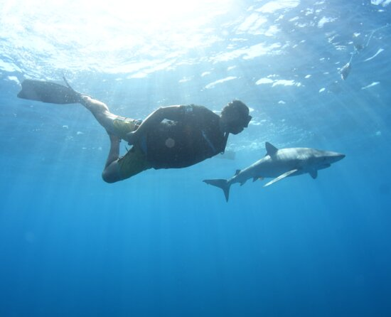 Snorkeling or Swimming with Sharks in Cabo San Lucas: Crew member swimming along side our Blue Shark