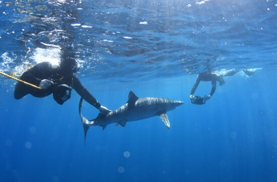 Snorkeling or Swimming with Sharks in Cabo San Lucas: Two travellers in our group with their personal cameras taking some high end shots.