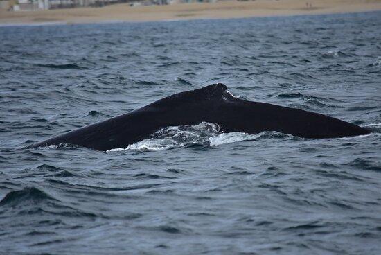 Excursão Aventura de Observação de Baleias do Zodíaco do Cabo: Our first whale sighting...