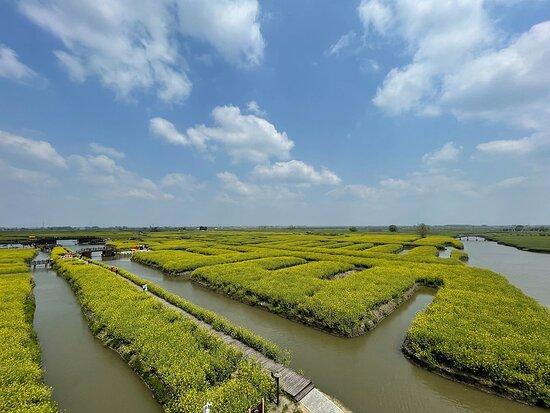 Xinghua, China: 千垛油菜花