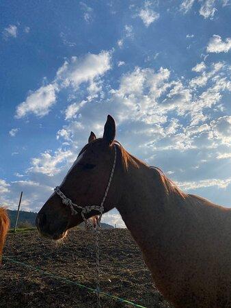 Torricella Peligna, إيطاليا: Sono stata in questo luogo durate l'estate scorsa  per trascorrere una giornata in compagnia. Ho fatto un giro a cavallo in campo non essendo esperta, è stata un'esperienza unica soprattutto per chi come me ama gli animali e la natura. Consiglio vivamente quest'avventura poiché adatta a tutte le età! 😍