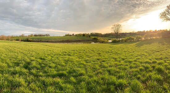 Cynthiana, KY: View from the other side of the pond