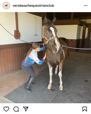 Learning how to groom and take care of a horse