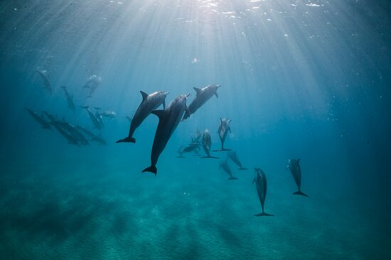 Dolphins everyday to the Napali Coast