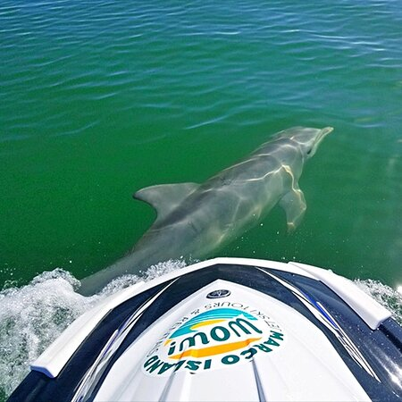 Best way to see the dolphins 🐬 (239) 888-2488