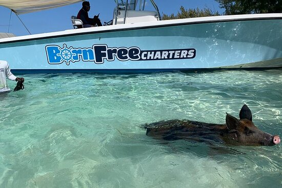 Full-Day Eleuthera Adventure with Swimming Pigs and Turtles