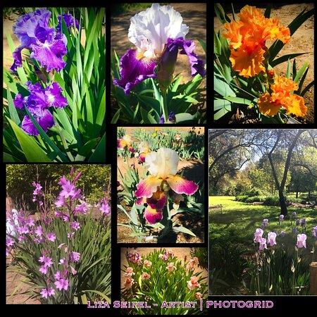 Horton Iris Garden