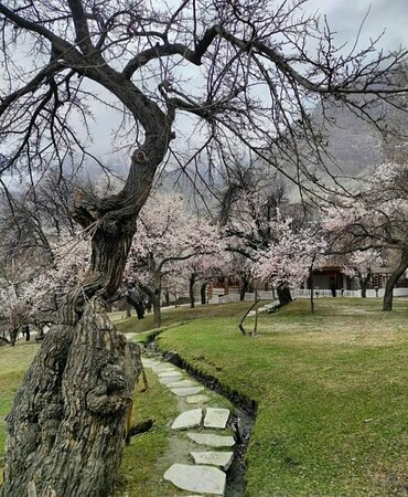 Apricot or Cherry blossom 🌸 or Spring season is one of the best time to visit Hunza. Join us to explore Hunza & Beautiful Pakistan 🇵🇰.
