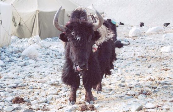 Tybet, Chiny: Memories of pre-Covid travel: making friends at Everest Base Camp.
