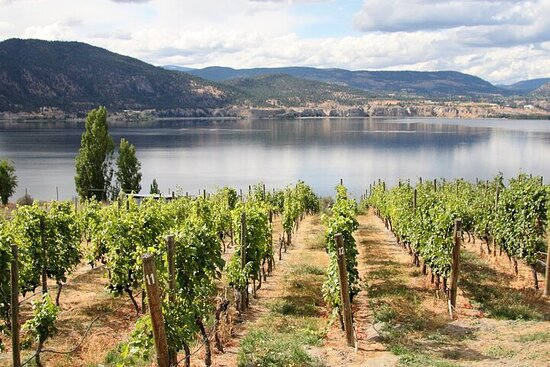 Naramata Wine Tour Full Day