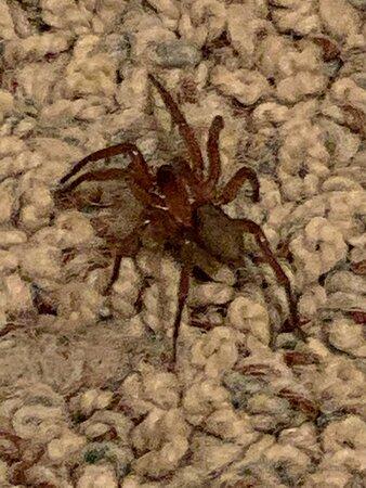 Spider on master bedroom floor